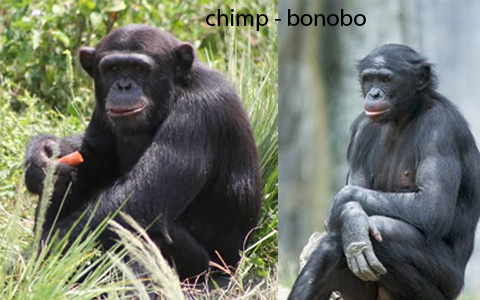 "chimpanzees human and family ties The family is rich in animal behaviorists  i also took a ""chimposeum"" at the  chimpanzee and human communication institute in ellensburg,  research  facilities, not to even mention cosmetics, involve redundant and indefensible  cruelties."